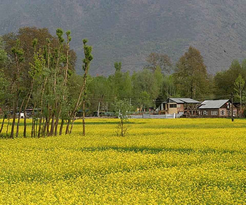 Kashmir_Spring